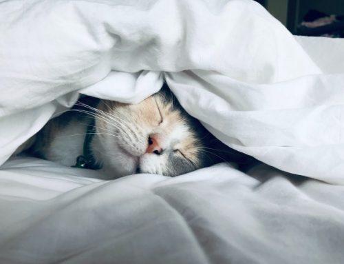 Finn helt riktig seng på nettet